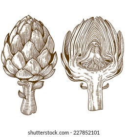 vector set of engraving illustration green vegetables artichoke on white background