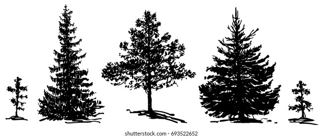 Vector set of fir trees and pine trees. Ink hand drawn silhouettes. Different types of trees. Group of big and small plants
