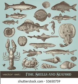 vector set: fish, shells and seafood - variety of detailed vintage illustrations