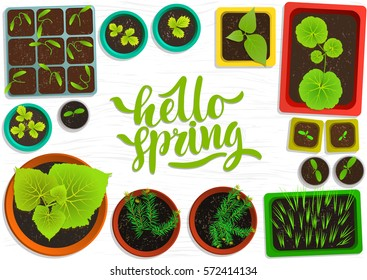 "Vector set of flat seedlings of garden plants in colored pots on white wooden surface. Top view. For web template, agriculture store, adv. Hand written green lettering 'Hello spring""."