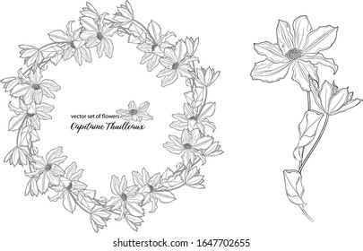 vector set of flowers and clematis buds. Capitaine Thuilleaux