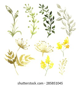 Vector Set of flowers painted in watercolor on white paper. Sketch of flowers and herbs.
