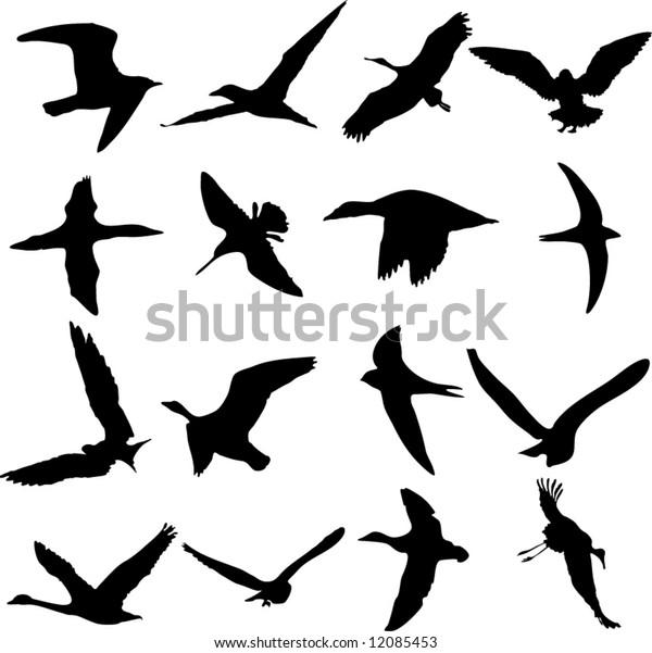 Vector set of flying birds
