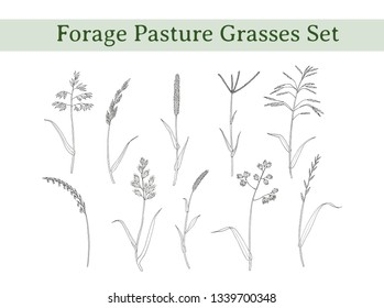 Vector set of forage pasture grasses. Sprigs of meadow herbs. Sketchy drawing. Hay plants for cows, horses and birds.