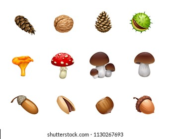 vector set of forest mushroom nut acorn cones