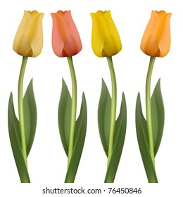 vector set of four tulips
