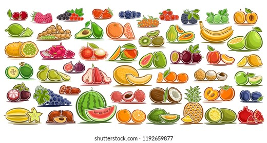 Vector set of fresh Fruits, 49 cut out organic fruits and berries, group of colorful design signs for package of drinks or ice cream, sweet apricot, healthy gooseberry, flat symbols for snack or jam.