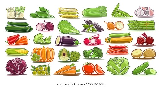 Vector set of fresh Vegetables, 30 isolated design symbols of vegetarian vegetable meal, group of colorful agriculture signs on white background, illustrations of simple farm elements for packaging.