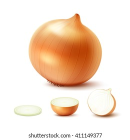 Vector Set of Fresh Whole and Sliced Yellow Onion Bulbs Close up Isolated on White Background