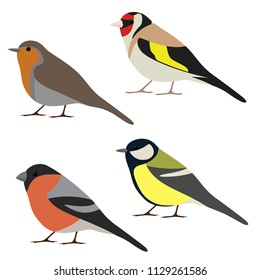 Vector set of garden bird. Robin, great tit, bullfinch, goldfinch isolated on white background. Colorful bird collection