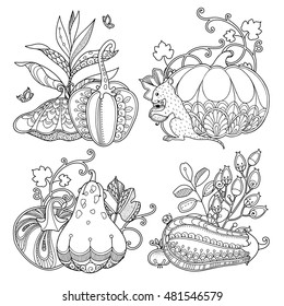 Vector set garden composition in doodle style. Floral, ornate, decorative, design elements. Black and white monochrome background. Pumpkins, berries and leaves. Zentangle coloring book