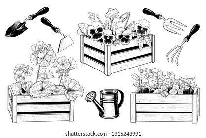 Vector set of garden tools and various seedlings in wooden boxes. Vintage ink drawing. Isolated objects on white background. Clipart.