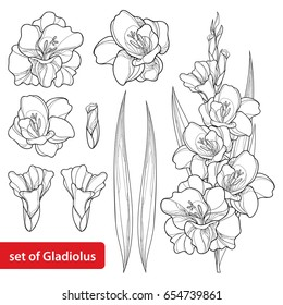 Vector set with Gladiolus or sword lily flower, bunch, bud and leaf in black isolated on white background. Floral elements in contour style with ornate gladioli for summer design and coloring book.
