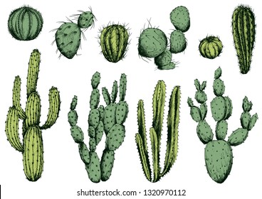 Vector set of green cactus plants. Isolated elements for design.