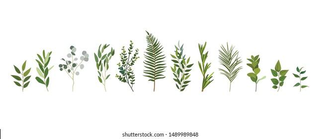 Vektorset aus grünem Wald und tropischem Blattwerk.