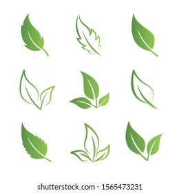 Vector set of green leaves.