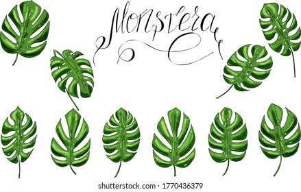 vector set of green monstera leaves and lettering for textile, print