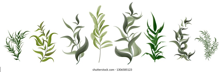 Vector set of green plants. Plants with long, sharp leaves. The flora elements of design. Collection of herbs on white background.