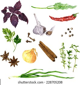 vector set of green stuff, spices and vegetables drawing by watercolor at white background, hand drawn food illustration