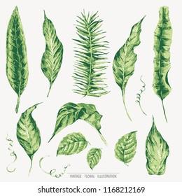 Vector set of green tropical leaves, botanical natural vintage illustration, design collection