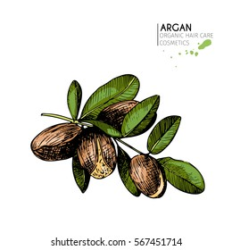 Vector set of hair care ingredients. Organic hand drawn colored elements. Argan nuts branch. Use for cosmetic package, shop, store, products, spa salon, wellness program, procedure, skin, beauty
