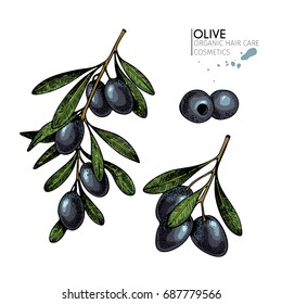 Vector set of hair care ingredients. Organic hand drawn elements. Farm market vegetables. Colored black olive branches. for cosmetic package, shop, store, products, spa salon, wellness program, skin.