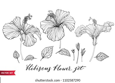 Vector set of hand drawing hibiscus flowers different shapes, monochrome artistic botanical illustration, isolated floral elements, hand drawn illustration.