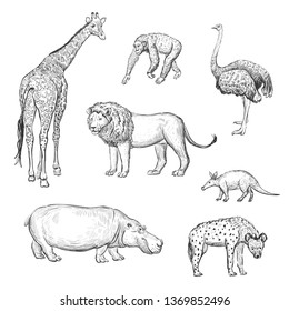 Vector set of hand drawings African animals