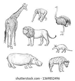 Dibujos a mano de vectores animales africanos