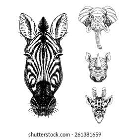 Vector set of hand drawn animal. Vintage illustration with elephant, giraffe, rhino and zebra.