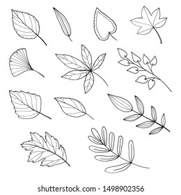 vector set of hand drawn autumn leaves
