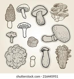 Vector set of hand drawn best edible mushrooms- morel, shiitake, cep, oyster, portobello, enokitake,  chanterelle, king trumpet, Maitake, truffle.