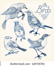 vector set of hand drawn birds