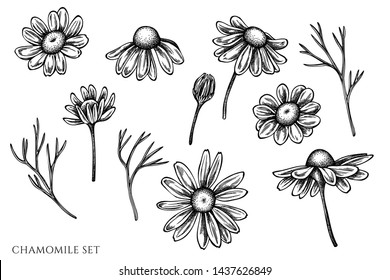 Vector set of hand drawn black and white chamomile
