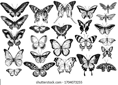 Vector set of hand drawn black and white great orange-tip, emerald swallowtail, jungle queens, plain tiger, rajah brooke's birdwing, papilio torquatus, swallowtail butterfly