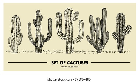 Vector set of hand drawn cactus. Sketch illustration. Different cactuses in monochrome style.