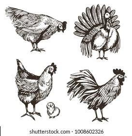 Vector set with hand drawn chicken, turkey, cock