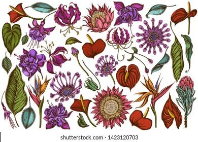 Vector set of hand drawn colored  african daisies, fuchsia, gloriosa, king protea, anthurium, strelitzia