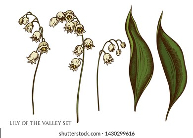 Vector set of hand drawn colored lily of the valley
