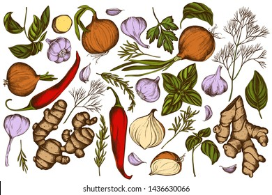 Vector set of hand drawn colored onion, garlic, pepper, greenery, ginger, basil, rosemary