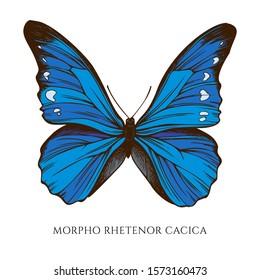 Vector set of hand drawn colored morpho rhetenor cacica