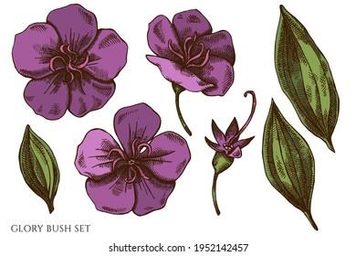 Vector set of hand drawn colored glory bush