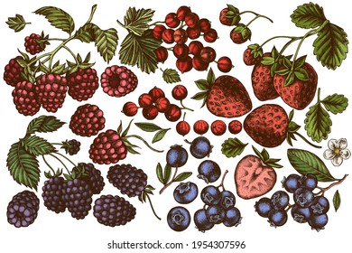 Vector set of hand drawn colored strawberry, blueberry, red currant, raspberry, blackberry