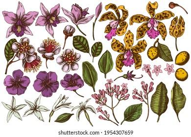 Vector set of hand drawn colored laelia, feijoa flowers, glory bush, papilio torquatus, cinchona, cattleya aclandiae