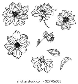 Vector set of hand drawn dahlia and leaves isolated on white background. Outline flowers are element for design. Hand-drawn contour lines.