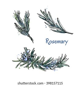Vector set of hand drawn images of Rosemary. Organic spice and herbs with flowers. Bright colorful elements isolated on white background. Black outline and blue and green watercolor stains and drips.