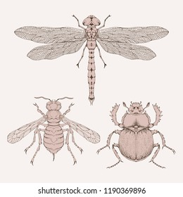 Vector set of hand drawn insects. Different insects in realistic style: dragonfly, wasp and scarab. Collection isolated on background. Sepia, vintage.