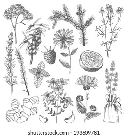Vector set of hand drawn medical herbs and plants isolated on white