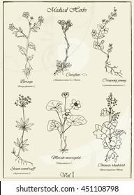 Vector set of hand drawn medical herbs and plants. Herbal set. Vector illustration. Vintage collection of hand drawn medical herbs and plants.