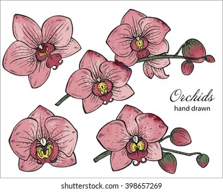 Vector set of hand drawn orchid branches with flowers. Floral botany collection in graphic style with watercolor texture